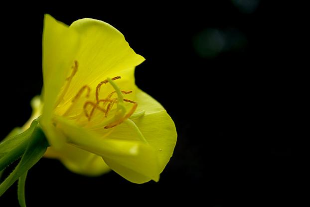 """фото """"#"""" метки: природа, цветы"""