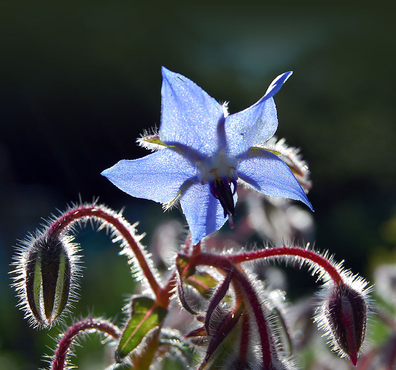 """фото """"..."""" метки: природа, макро и крупный план, цветы"""