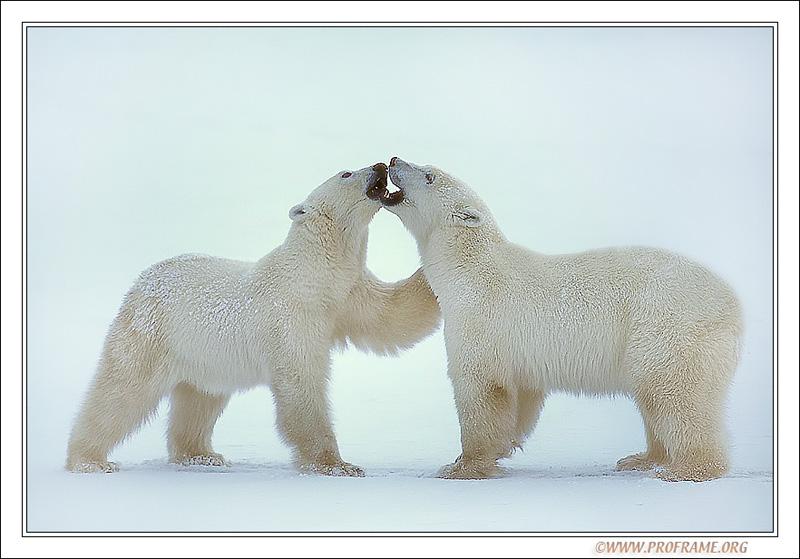 """фото """"Private Bear Business"""" метки: природа, путешествия, Северная Америка, дикие животные"""