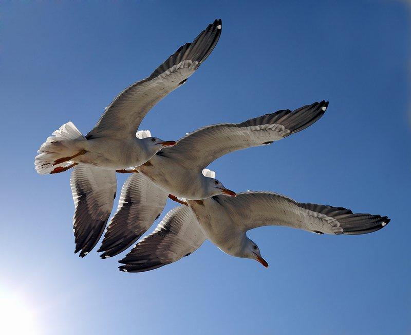 """фото """"Помаши мне крылом."""" метки: фотомонтаж, природа, дикие животные"""