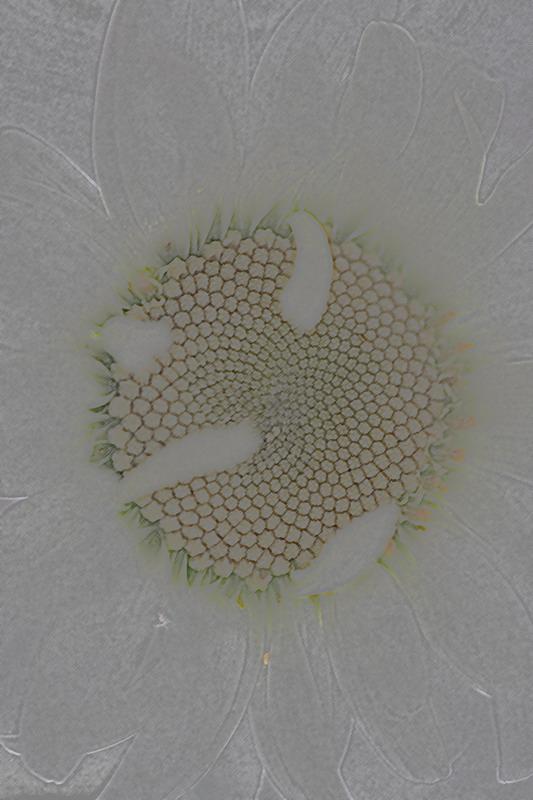 "фото ""***"" метки: природа, абстракция, цветы"