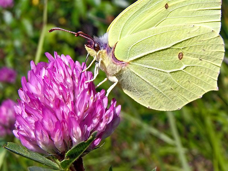 "фото ""..."" метки: природа, насекомое"
