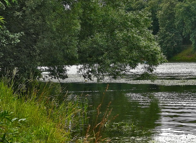 "фото ""Тишина"" метки: пейзаж, природа, вода"