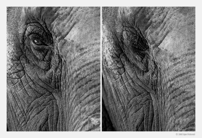 """фото """"Portrait of a Lady"""" метки: природа, черно-белые, дикие животные"""