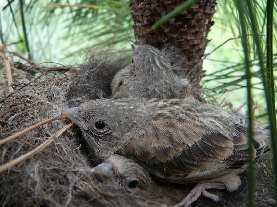 """фото """"Птенцы"""" метки: природа, макро и крупный план, дикие животные"""