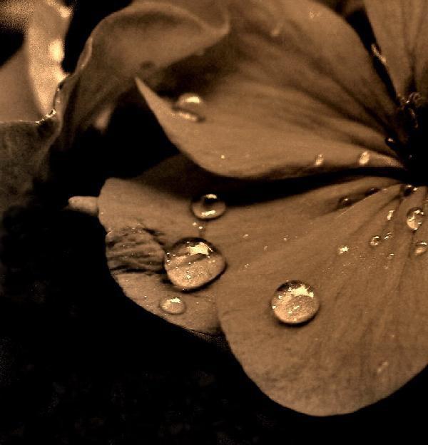 "фото ""Tears of the nature"" метки: природа, цветы"