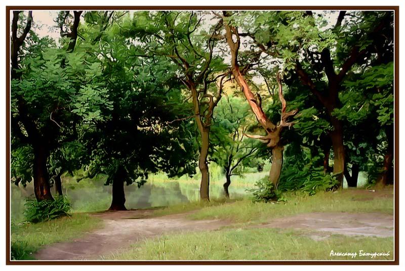 """фото """"Зарисовки леса"""" метки: пейзаж,"""