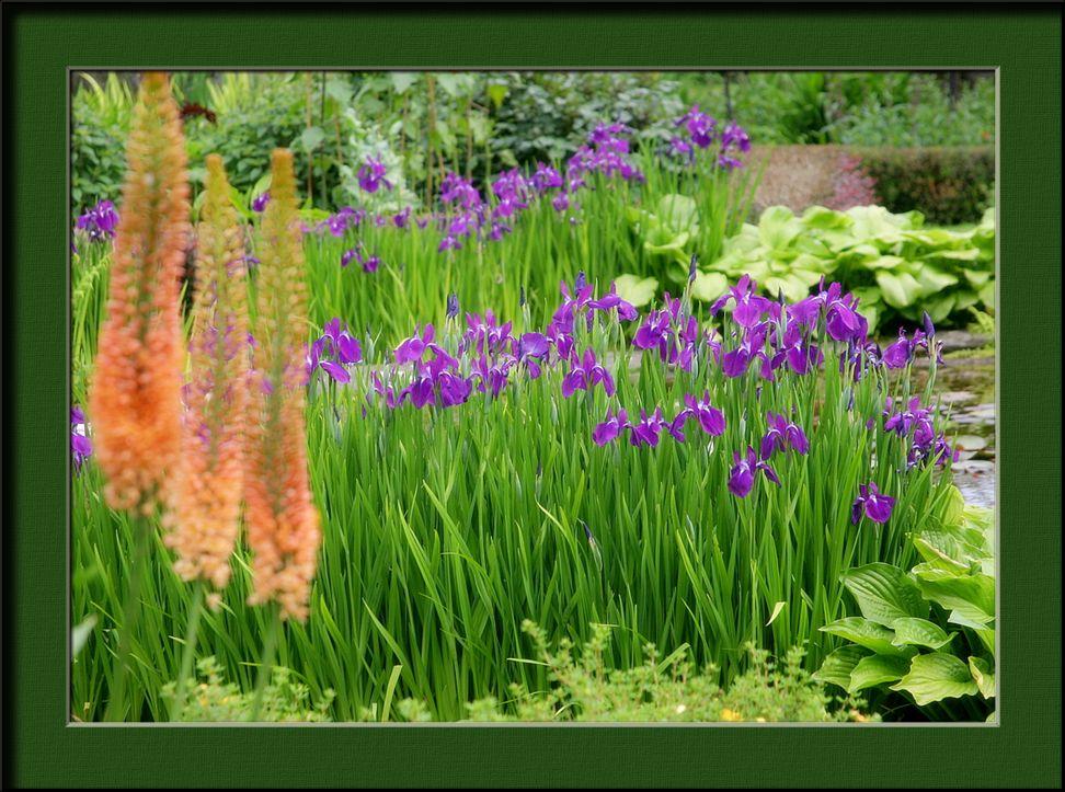 """фото """"Happy birthday bere"""" метки: природа, цветы"""