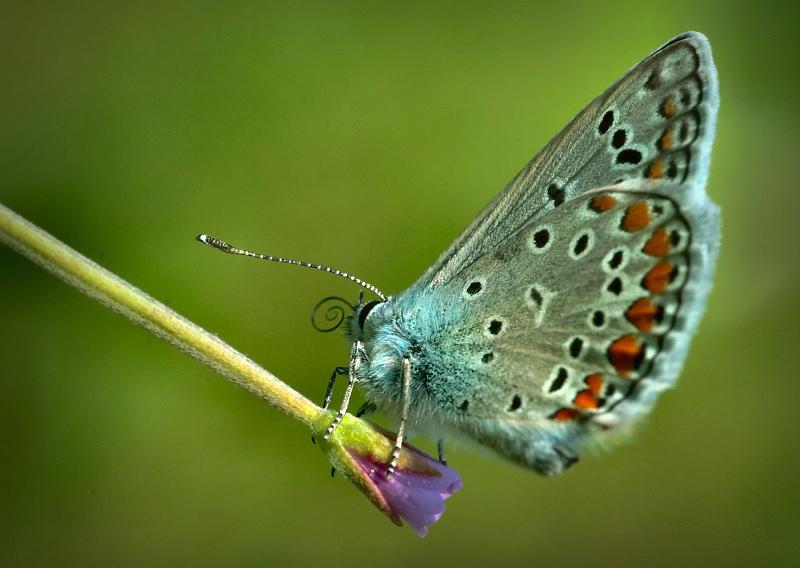 """фото """"FlyingButter"""" метки: макро и крупный план, природа, насекомое"""