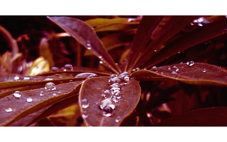 """фото """".s u c k . m y . k i s s."""" метки: природа, цветы"""