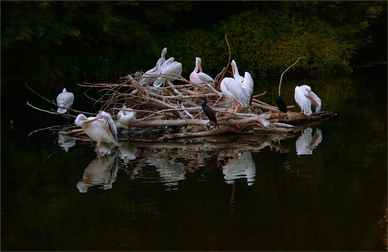 """фото """"***"""" метки: природа, дикие животные"""
