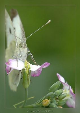 "фото ""не макро- просто бабочка"" метки: ,"