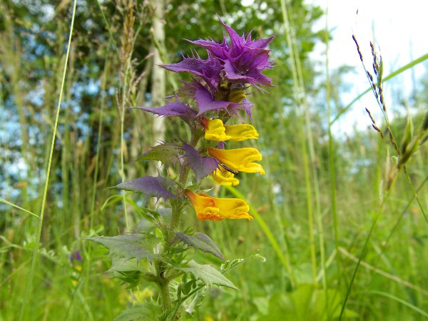 "фото ""Лесная красавица"" метки: природа, цветы"