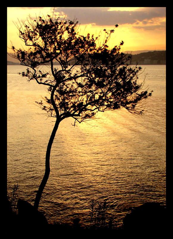 """фото """"Just a tree..."""" метки: пейзаж, вода, закат"""