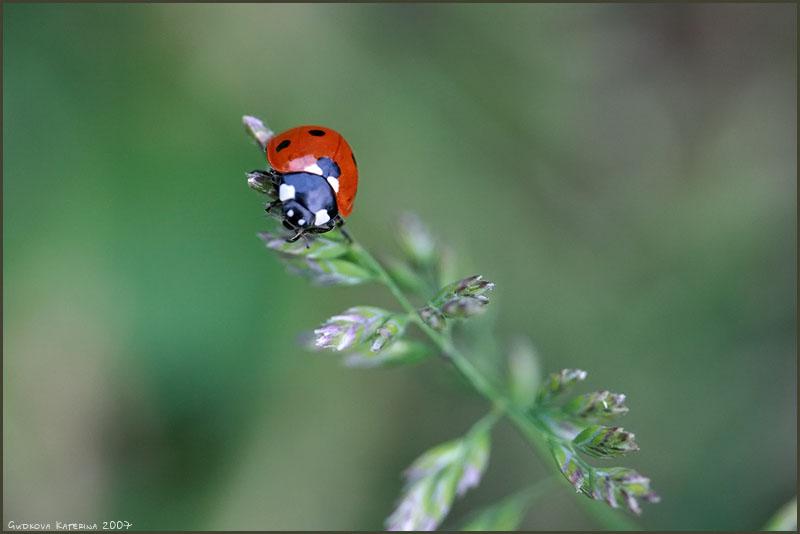 """фото """"""""Держи меня, соломинка!"""""""" метки: природа, макро и крупный план, насекомое"""