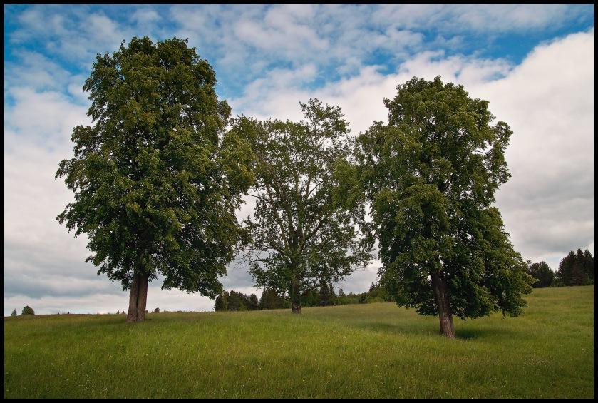 "фото ""Три дерева"" метки: пейзаж, лето"