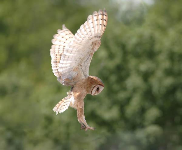 """фото """"about to land"""" метки: природа, дикие животные"""