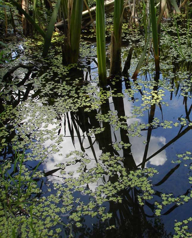 """фото """"Заводь"""" метки: пейзаж, природа, вода"""
