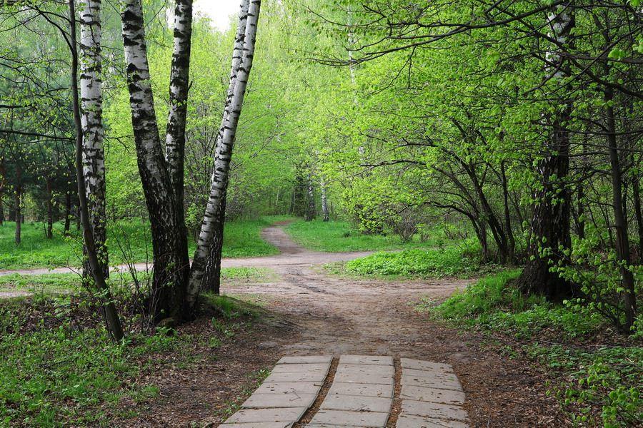 """фото """"На пороге"""" метки: пейзаж, природа, весна, цветы"""