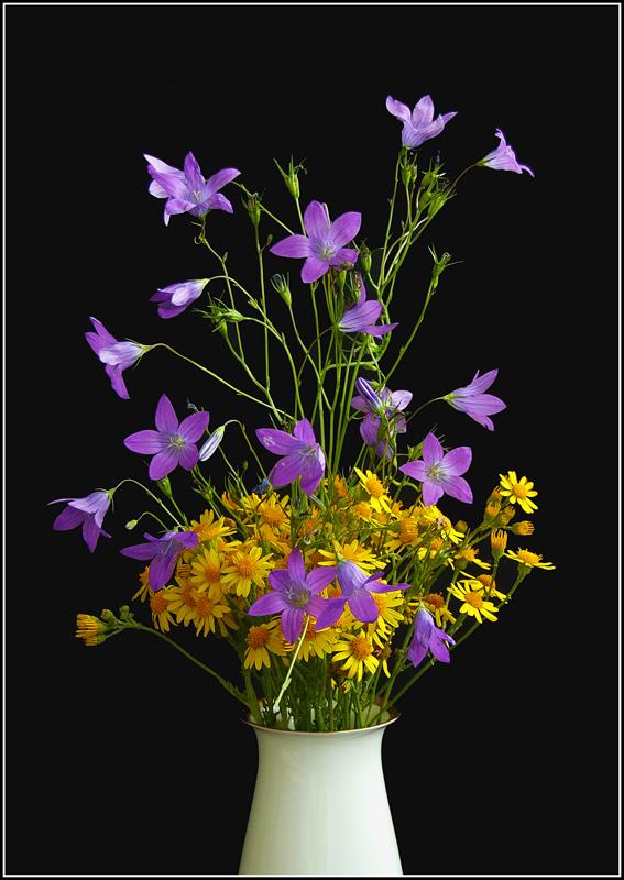 "фото ""Салют"" метки: природа, цветы"