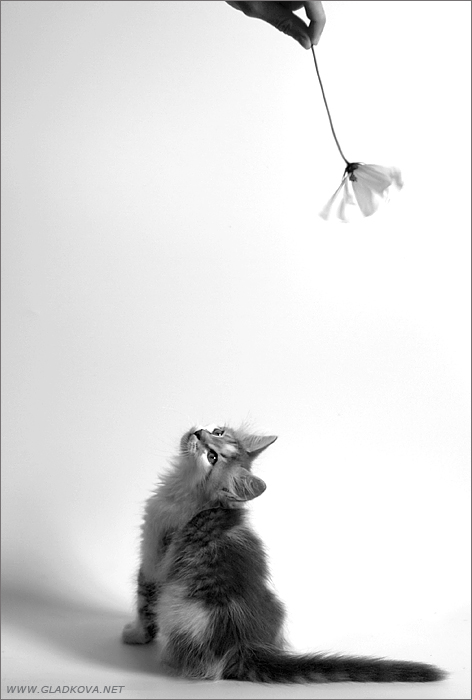 """фото """"Про фотосессию..."""" метки: природа, жанр, домашние животные"""