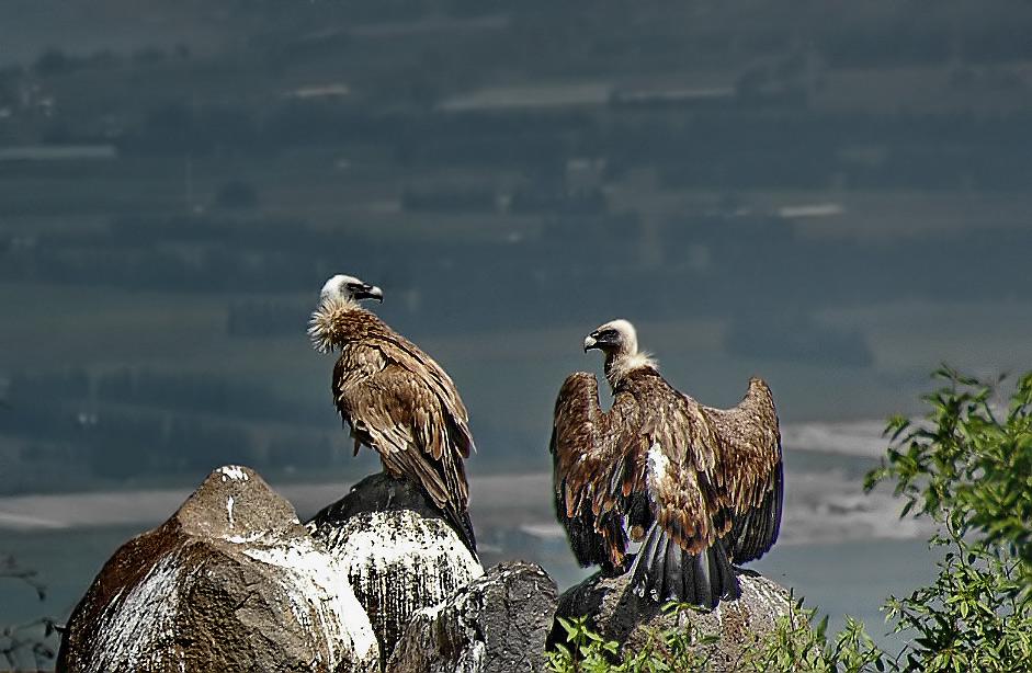 """фото """"Заоблачная беседа"""" метки: природа, путешествия, дикие животные"""