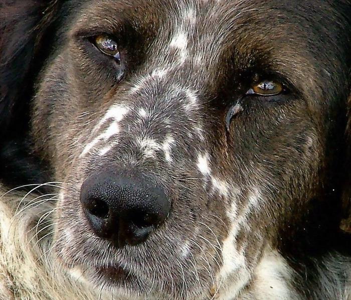 """фото """"Sadness"""" метки: природа, разное, домашние животные"""