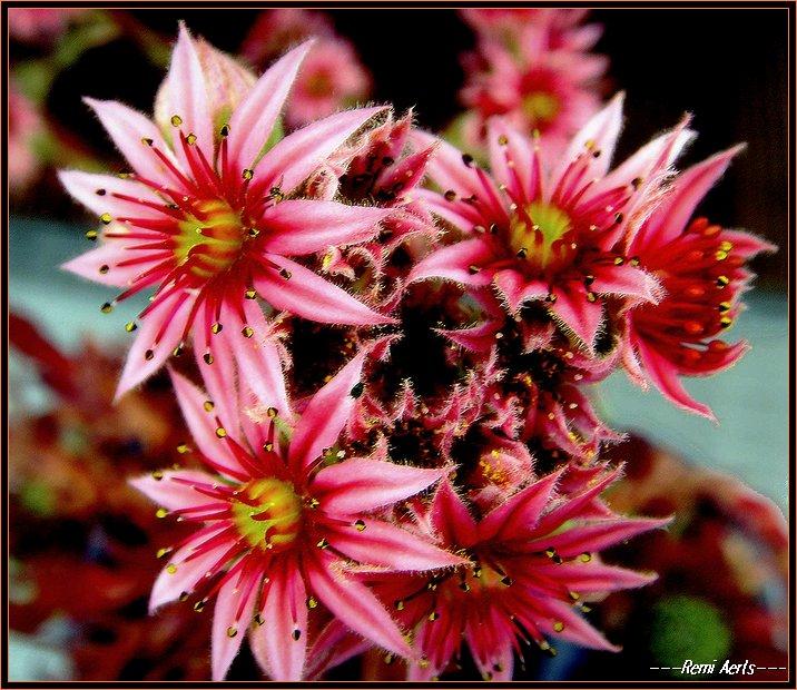 """фото """"heavy colors"""" метки: природа, макро и крупный план, цветы"""