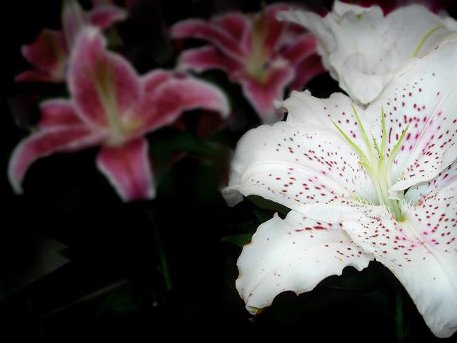 """фото """"Flowers reds"""" метки: природа, цветы"""