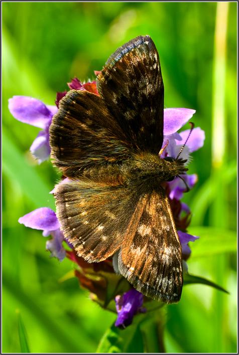 """фото """"~--~"""" метки: макро и крупный план, природа, насекомое"""