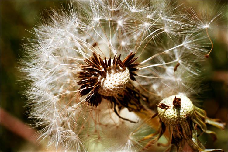 """фото """"лето - это маленькая жизнь"""" метки: природа, цветы"""