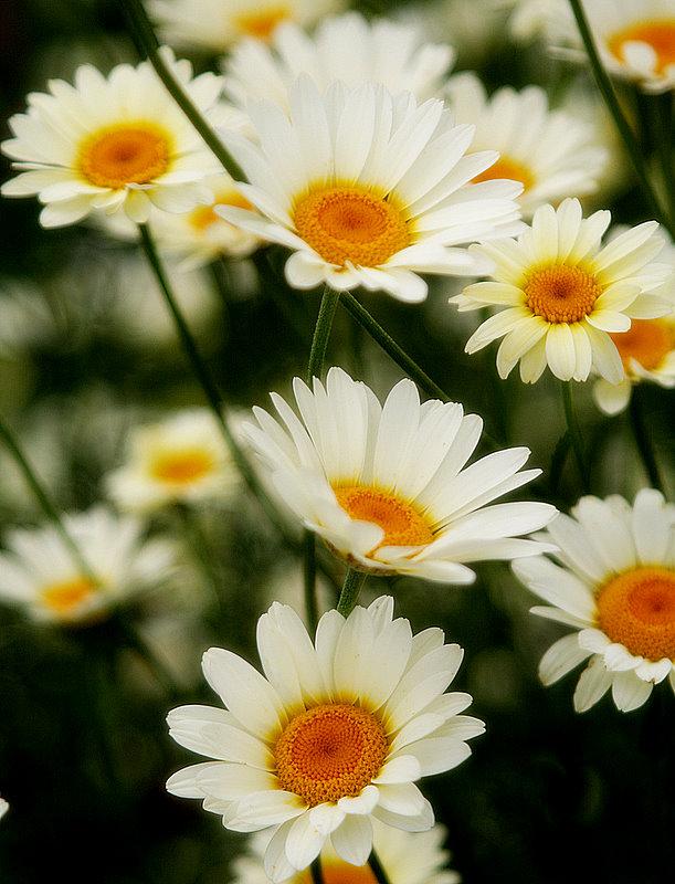 "фото ""Fresh"" метки: природа, цветы"