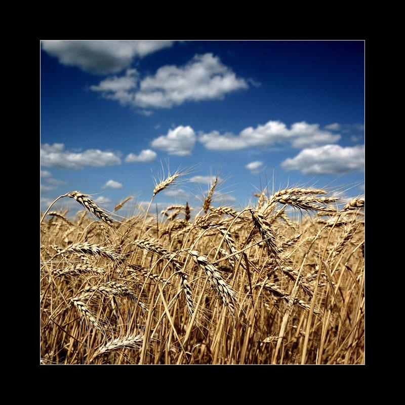 """фото """"Leto"""" метки: природа, пейзаж, лето"""