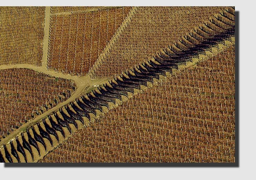 """фото """"Vineyards"""" метки: пейзаж,"""