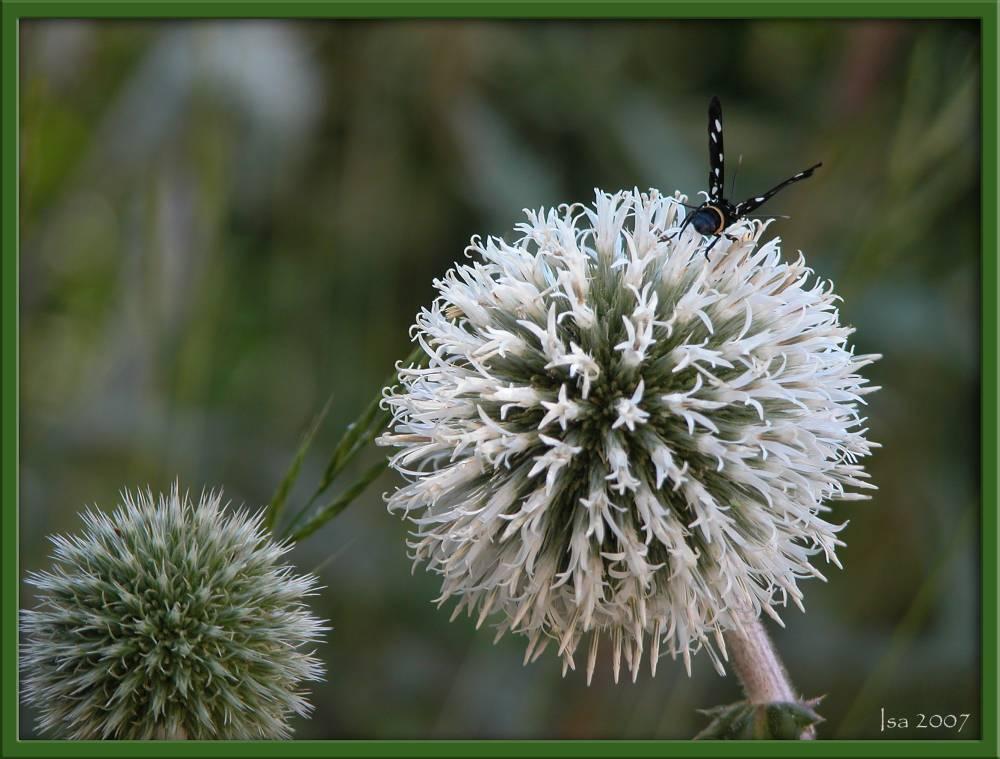 "фото ""rest time"" метки: природа, цветы"