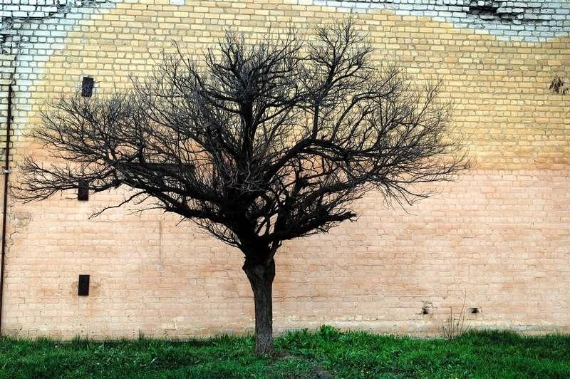"""фото """"Этюд с деревом"""" метки: город,"""