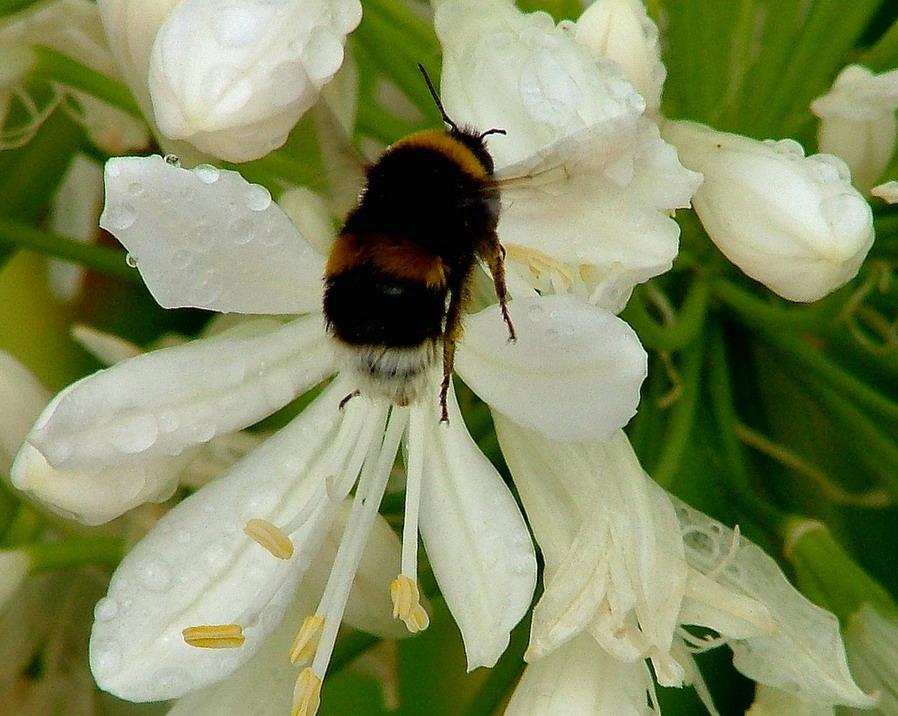 """фото """"Aproaching"""" метки: макро и крупный план, природа, насекомое"""