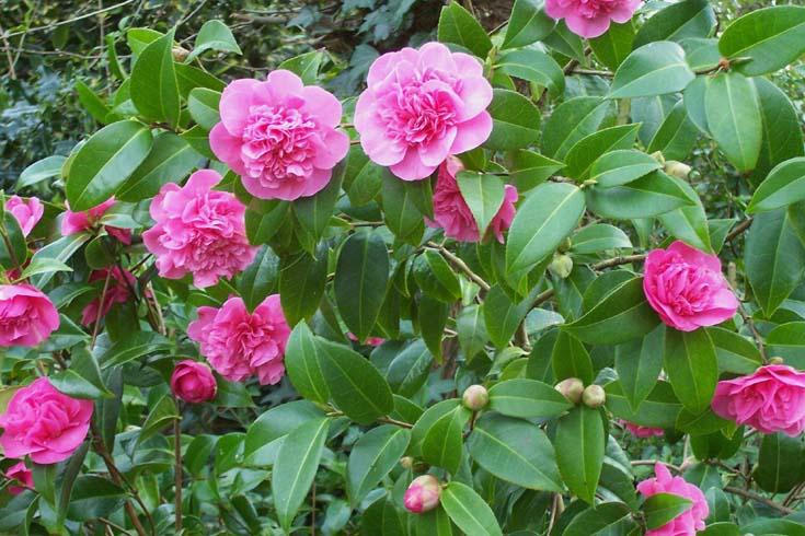 "фото """" Happy Birthday Linda Mercaldo "" 22nd July."" метки: природа, цветы"