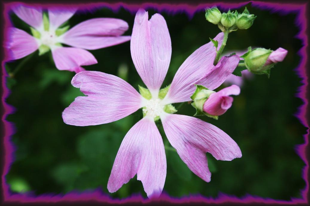 """фото """"Настроение"""" метки: макро и крупный план, природа, цветы"""