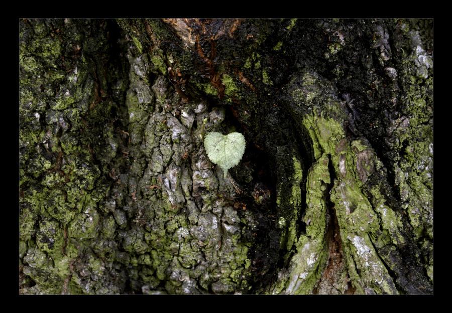 "фото ""No Ordinary Love"" метки: абстракция, природа, цветы"