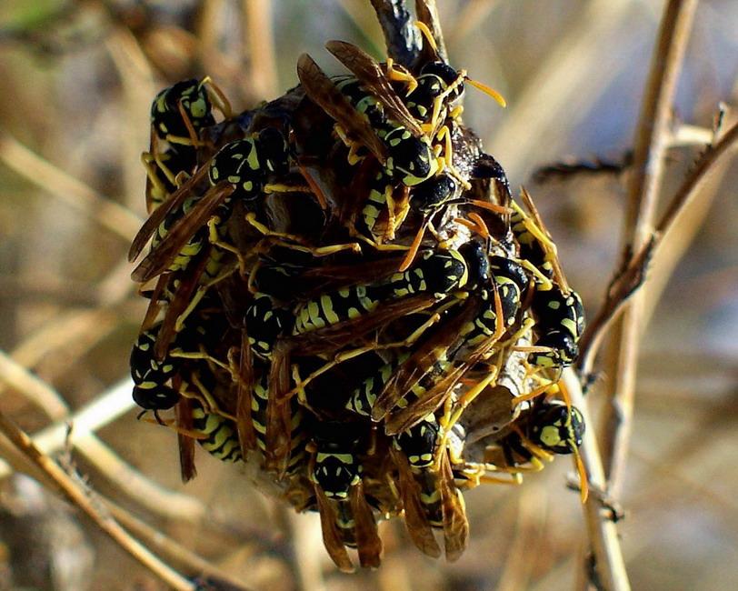 """фото """"Crowded House"""" метки: макро и крупный план, природа, насекомое"""