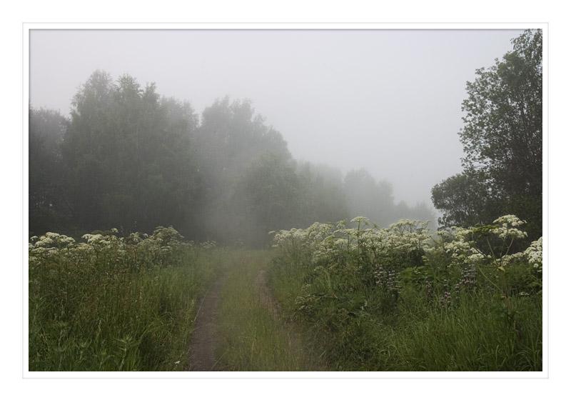 """фото """"Утренняя прогулка"""" метки: пейзаж, лес, лето"""