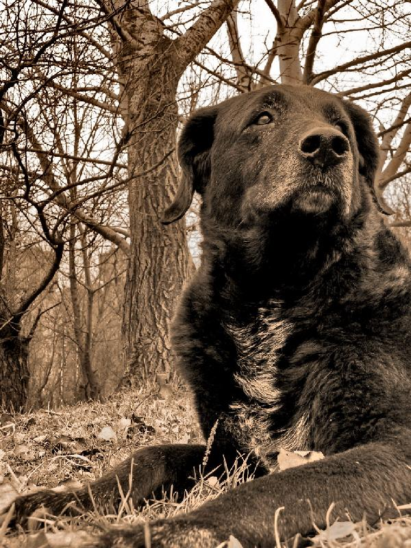 "фото ""My old friend Loki, who passed away a few months ago"" метки: природа, домашние животные"