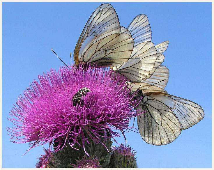 """фото """"Очередь"""" метки: природа, насекомое"""