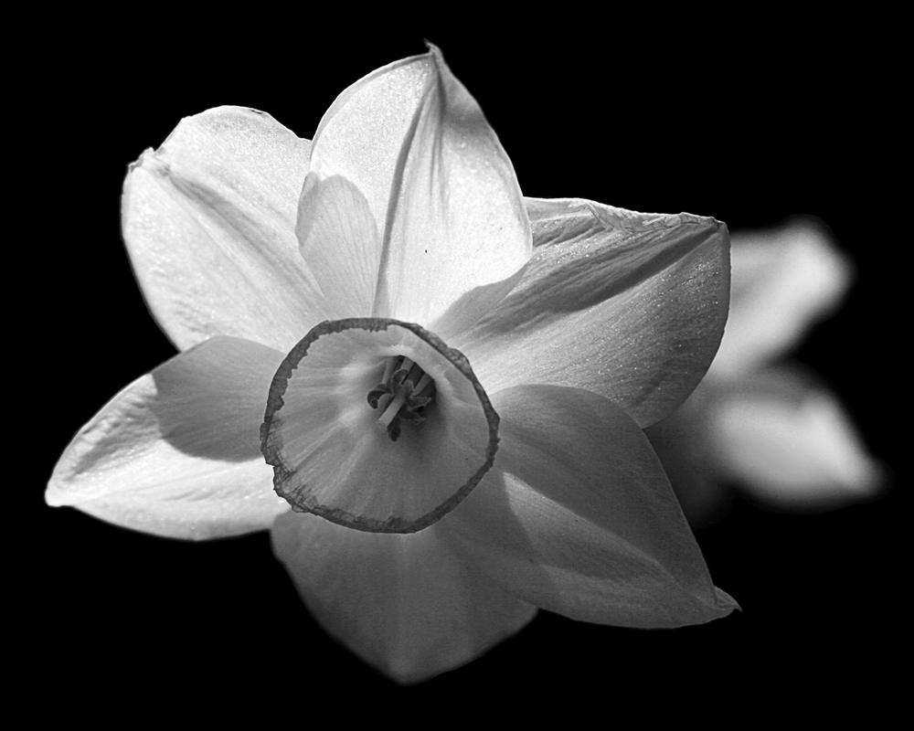 """фото """"Увядание"""" метки: природа, макро и крупный план, цветы"""