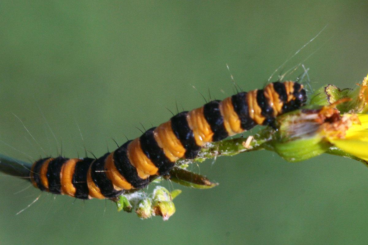 """фото """"Живи на яркой стороне!"""" метки: природа, макро и крупный план, насекомое"""
