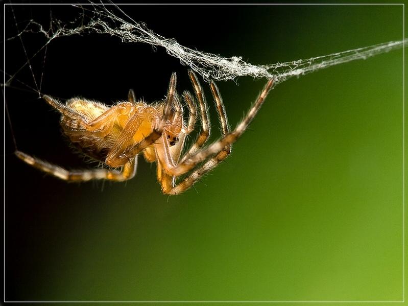 """фото """"На границе"""" метки: природа, макро и крупный план, насекомое"""