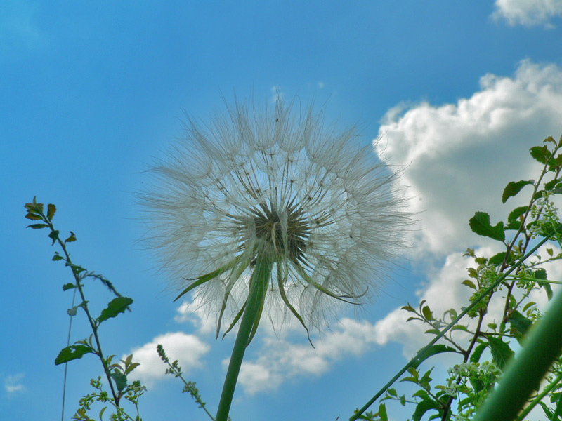 "фото ""ground view"" метки: природа, цветы"