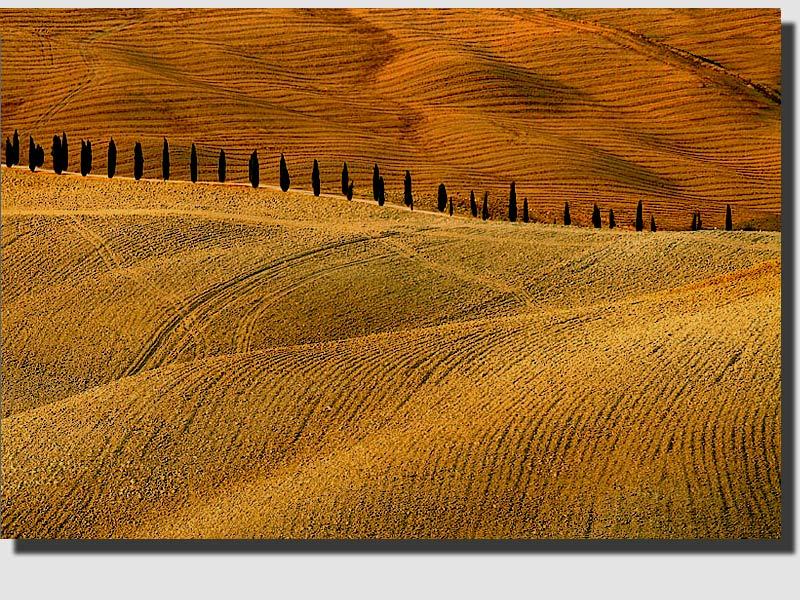 "фото ""Lines"" метки: пейзаж, лето"