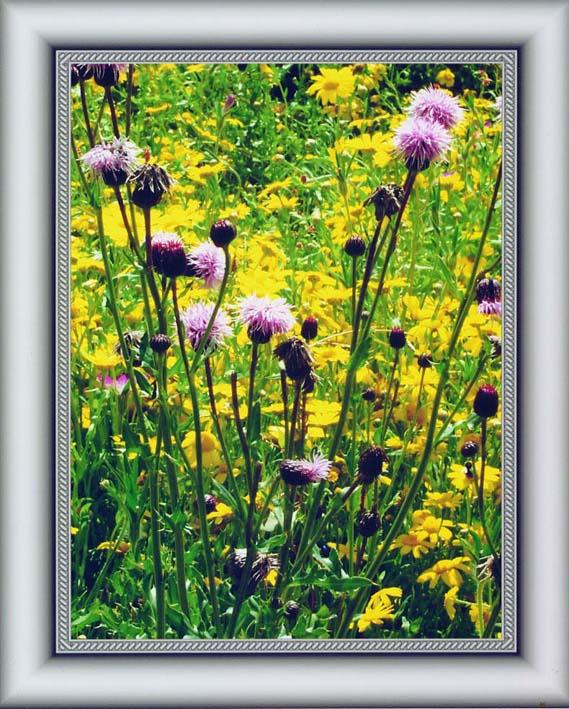 """фото """""""" Sawwort """""""" метки: природа, цветы"""